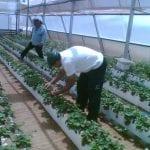 Greenhouse in Nitzan