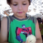 boy and chick