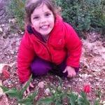 havot-yair-tulips-20121