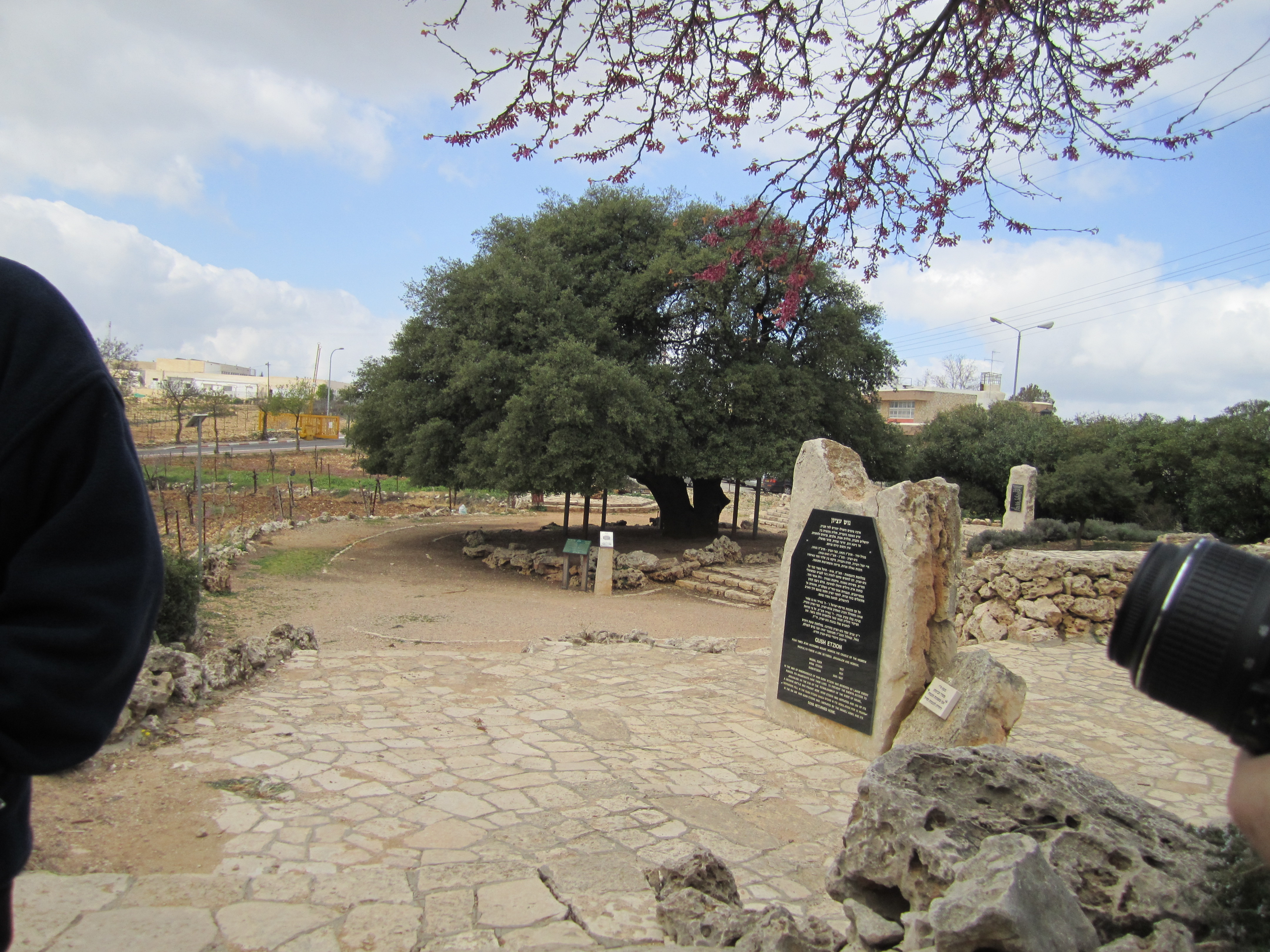 Iconic Lone Tree in Gush Etzion
