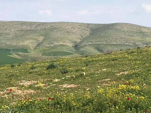 Spring time in the Jordan Valley
